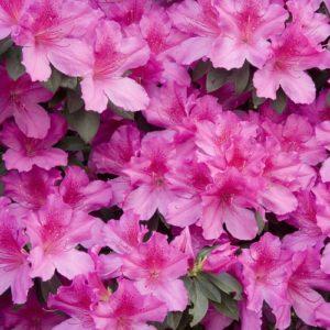 Wade Nursery flowers
