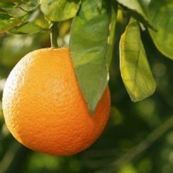 Wade Nursery orange